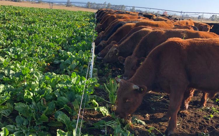 Por qué la transición al cultivo es tan importante? - Infortambo Chile